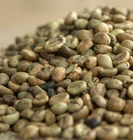 top coffee exporters in uae