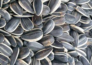 Sunflower Seed dubai uae