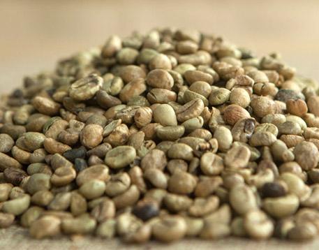 ethiopian coffee exporters